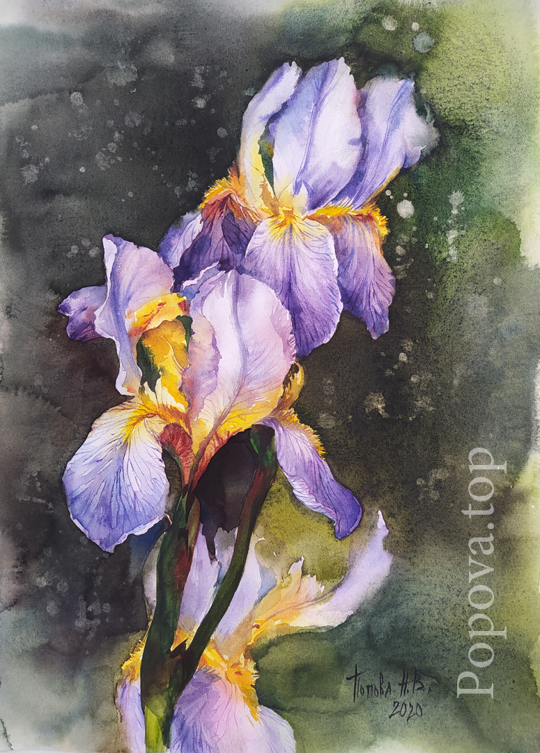 Irises 3 Scene A3 Natalia Popova - Professional Artist for the Master - Class (Live) of Elena Moroz February 2020